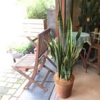 サンスベリア ローレンティー 7号鉢サイズ 鉢植え サンセベリア ローレンチー 送料無料 薫る花 観葉植物 おしゃれ インテリアグリーン 大型 中型