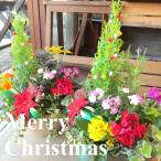 クリスマスのおまかせ寄せ植え(テラコッタ風オーバル形樹脂鉢植え) 花 フラワー プレゼント ギフト お誕生日 開店祝い お祝い お歳暮 御歳暮 玄関 冬 セット