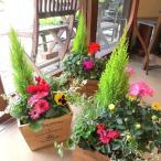 季節のおまかせ寄せ植え(鉢色選べる♪スクエアウッドボックス鉢植え) 寄せ植え アソート 花苗 鉢花 ハーブ プレゼント 誕生日 開店祝い 引越し ガーデニング