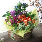 敬老の日 花 ギフト プレゼント 季節の鉢花の寄せカゴ