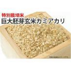 巨大胚芽玄米、玄米食用にどうぞ!