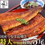 鰻 国産 特大うなぎ蒲焼 170g-199g×5本セット(鰻 ウナギ)