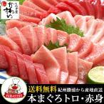 本マグロ トロ 赤身セット500g 紀州串本産 養殖 まぐろ 鮪 刺身 柵 冷凍 送料無料 本まぐろ #元気いただきますプロジェクト
