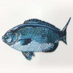 魚ワッペン大 メジナ