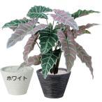 個性的な葉が印象的なアローカシア・アマゾニカの人工観葉植物♪