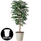 コーヒーの木 大型 全高2.0m 人工観葉植物(花・実付き コーヒーノキ 人工樹木 造花 インテリアグリーン フェイクグリーン)