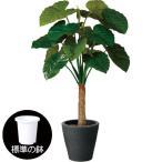濃緑色の大きい葉と太い茎が特徴。クワズイモの人工樹木です♪