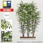 屋外使用も可能。幅広タイプのベンジャミンの人工観葉植物です♪