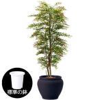 屋外使用も可能。リアルなベンジャミンの人工観葉植物です♪