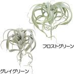 人工観葉植物・キセログラフィカ・全長35cm・2本セット