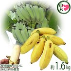 今が旬 沖縄県産 銀バナナ 約1.6kg Banana Party 甘みが強くほどよい酸味 自然本来の味の無農薬国産バナナ 送料無料
