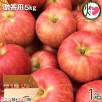 ギフト サンつがる 贈答用 5kg(12-18玉) 丘の上ファーム原農園 長野県 信州 りんご 果物 美味しさ重視の無袋栽培 クエン酸・リンゴ酸 贈答用 条件付き送料無料