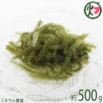 純沖縄産 A品 朝摘み 生海ぶどう オジーの夢 500g 食物繊維 ランキング1位 送料無料