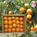 屋久島たんかん 自家用 5kg 約30玉〜約40玉×1箱 みかん フルーツ 果物 柑橘 新鮮 条件付き送料無料