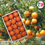 屋久島たんかん 贈答用 Lサイズ 5kg 約30玉×1箱 みかん フルーツ 果物 柑橘 新鮮 ギフト 条件付き送料無料