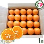 屋久島たんかん 贈答用 Mサイズ 5kg 約40玉×1箱 みかん フルーツ 果物 柑橘 新鮮 ギフト  条件付き送料無料