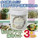 私のスプラウト栽培キット ブロッコリー ラディュシュ  スプラウト栽培専用ガラス容器 1セット