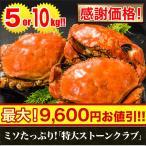 かに カニ 蟹 【感謝価格】ミソたっぷり!「特大ストーンクラブ(オス)」10kg(総重量:約11kg前後)