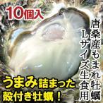 生食用 唐桑産もまれ牡蠣Lサイズ(殻付き)  【唐桑漁協】 (10枚) 牡蠣 殻付き 生食 ナイフ・食べ方説明書付き