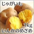 じゃがいも インカのめざめ 1kg 北海道産 サイズ混 訳あり