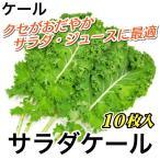ケール サラダケール 生葉 10枚入 約100〜150g 宮城県産