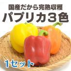 パプリカ 3色セット Tedy.(林 俊秀さん) 茨城産 NHKひるブラ出演