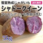 じゃがいも シャドークイーン 5kg 雪室熟成 北海道産 小キズ