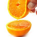 果物 ギフト デコポン みかん 5kg 糖度センサー選別 送料無料