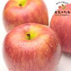 フルーツ ギフト りんご 旬の産地より 2.5kg 糖度選別品 果物 送料無料