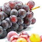 果物 ギフト 山梨県産 ぶどう 種なし ピオーネ 1kg 以上 2房入り 大粒 完熟