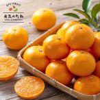 愛媛県産 究極の柑橘 せとか みかん 3kg