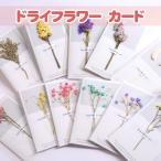新品 カード ドライフラワー カード 8個入り 花 かわいい プレゼント ギフト お祝い 花言葉 メッセージカード 送料無料