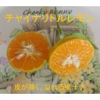 チャイナリトルレモン(四季橘 カラマンシー)◆60cm/5号鉢