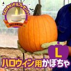 ハロウィン用かぼちゃ Lサイズ(直径22〜26cm、重量6kg前後)LEDキャンドル1個つき(送料込み)