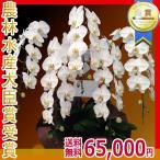 胡蝶蘭(コチョウラン) 大輪 白 5本立 65輪以上 16