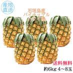 お中元 ギフト 送料無料 石垣島産 パイナップル ハワイ種  5kg  4〜6玉