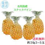 送料無料 石垣島産 スナックパイン 3kg(3〜5玉)フルーツギフト 日付指定不可