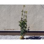 Yahoo!樹緑 Yahoo!店新元号 令和 無料枯れ保証 北米スタイル  室内 洋風 シンボルツリー 4本セット 目隠し 送料無料