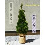 Yahoo!樹緑 Yahoo!店コニファー グリーンコーン 無料枯れ保証 北米スタイル  室内 洋風 シンボルツリー 4本セット 目隠し 送料無料 約120cm セット
