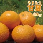 愛媛産 甘夏20kg(10kg×2箱)