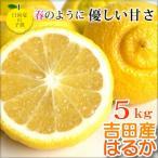 超低刺激、淡白な味。愛媛県 はるか5kg