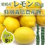 愛媛産特栽レモン2kg 減農薬(50%以上削減)/ワックスおよび防腐剤不使用