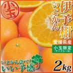 柑橘 - 愛媛産 小玉 伊予柑2kg(いよかん)(小玉:Mサイズ以下込み)小玉限定の食べきりサイズは、味も濃縮