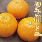 柑橘 - 愛媛産 贈答用 伊予柑20kg(いよかん)(精品:L〜3Lサイズ何れか揃え)元祖ジューシーフルーツ果汁たっぷり、芳醇な香り立つ柑橘 今では希少