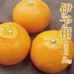 柑橘 - 愛媛産 贈答用 伊予柑2kg(いよかん)(精品:L〜3Lサイズ何れか揃え)元祖ジューシーフルーツ果汁たっぷり、芳醇な香り立つ柑橘 今では希少