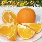 愛媛産 贈答用ネーブルオレンジ10kg