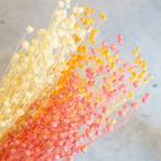 ドライパーツ リンフラワー 全5色 【アロマワックスサシェ材料 キャンドル材料 ドライフラワーアレンジメント用】