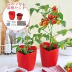 ハートマト栽培セット トマト 栽培セット 家庭菜園 ガーデニング ミニトマト 小さい サイズ 可愛い ミニ ハートポット インテリア グリーン 在宅ワーク 簡単