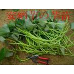 好評販売中 予約も随時受付中 ◆さつまいも苗◆ 黄金千貫 サツマイモ苗 10本 切り芋苗