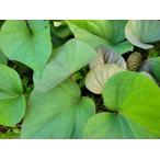 平成30年春 芋苗 予約受付中 ◆さつまいも苗◆ パープルスイートロード サツマイモ苗  10本 切り芋苗